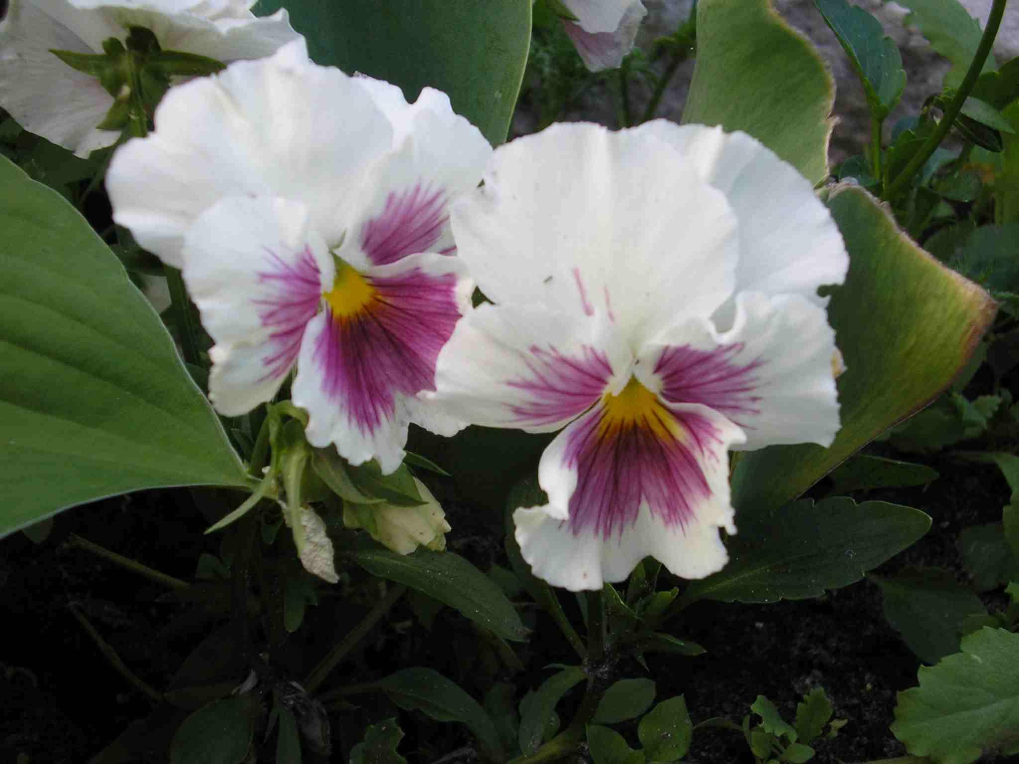 Цветы фото для любимой жены
