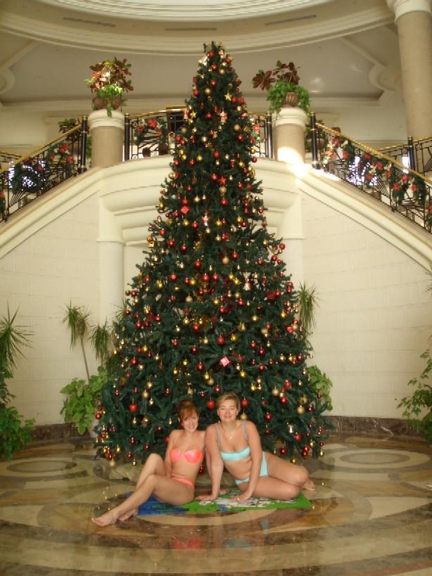 Новый год в Египте!. В лесу родилась елочка