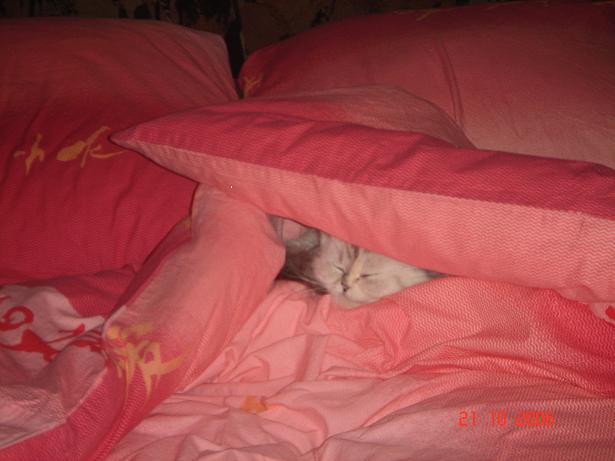 Лапочка-дочка (Леляша, Габриелла Претти Джой). Лучше кошки зверя нет!