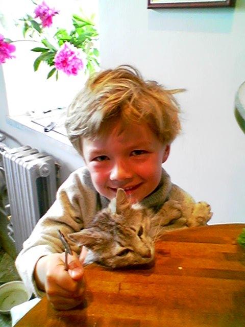 Два кота. Ребята и котята