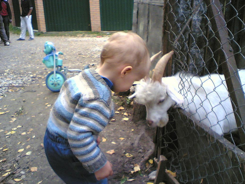И на прогулке нам встретился козел.... Это сладкое слово - прогулка!..