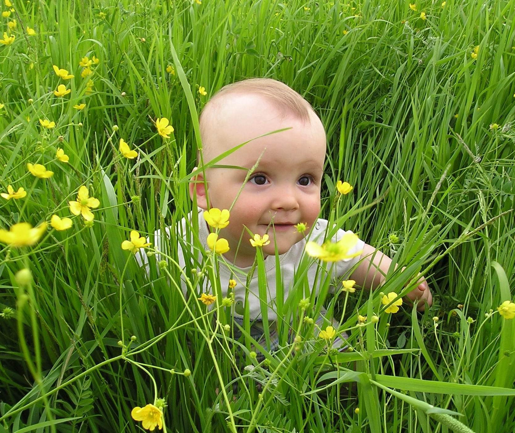 Наш цветочек. Лето, ах лето!..