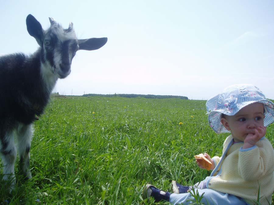 Козы, козы....а говорили они только в носу..... Лето, ах лето!..