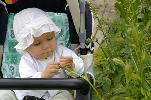 Очень юный натуралист. Лето, ах лето!..