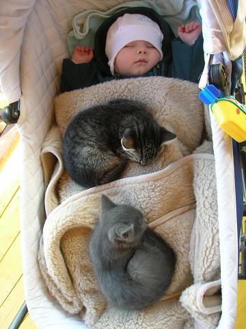 пригрелись, хулиганы.... Закрытое голосование фотоконкурса 'Ребята и котята'