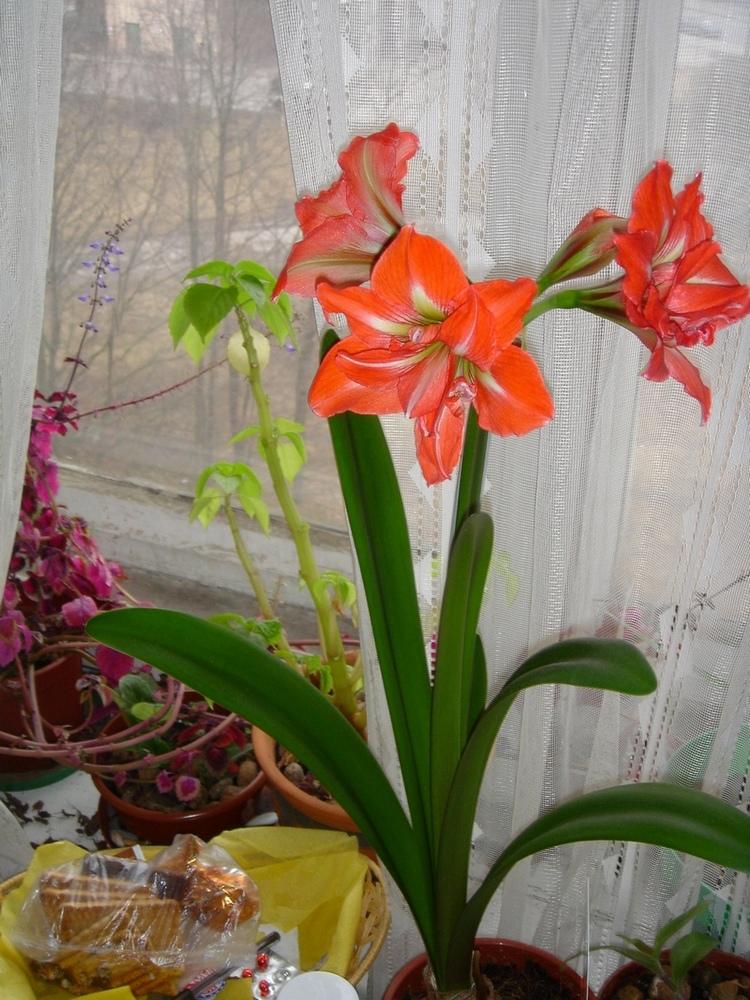 мое цветущее окно. Растения комнатные