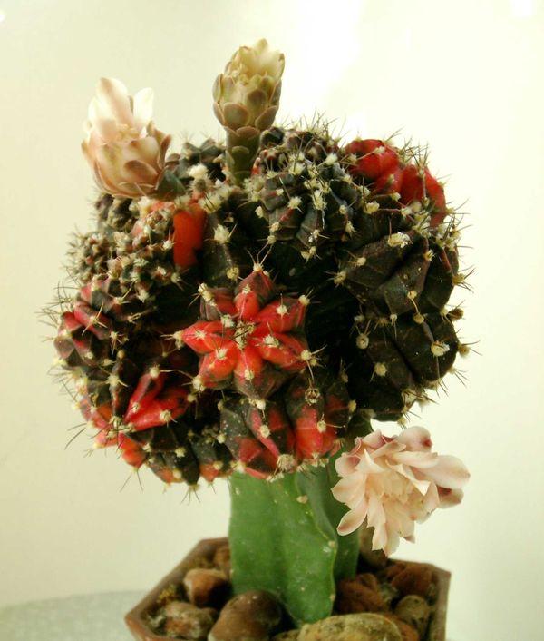 Цветы запоздалые.... Растения комнатные