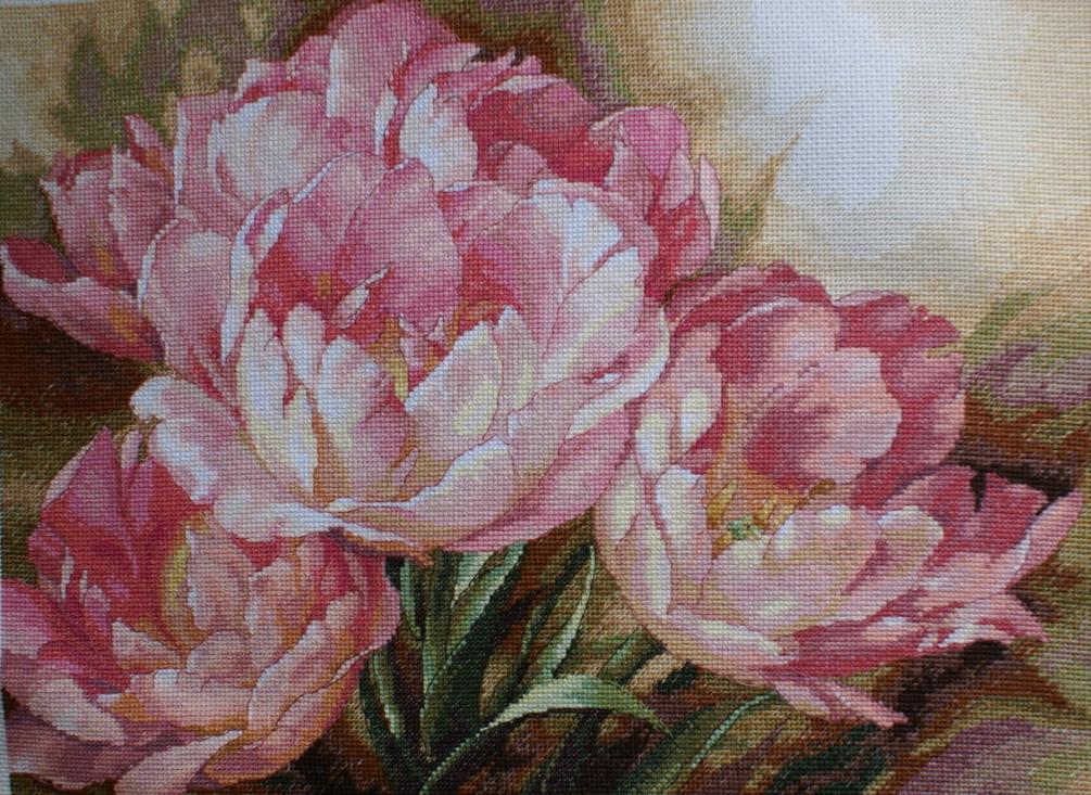 Tulip Trio от Dim . Растения (в основном цветы)