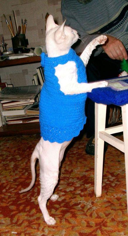 Одежки для питомцев
