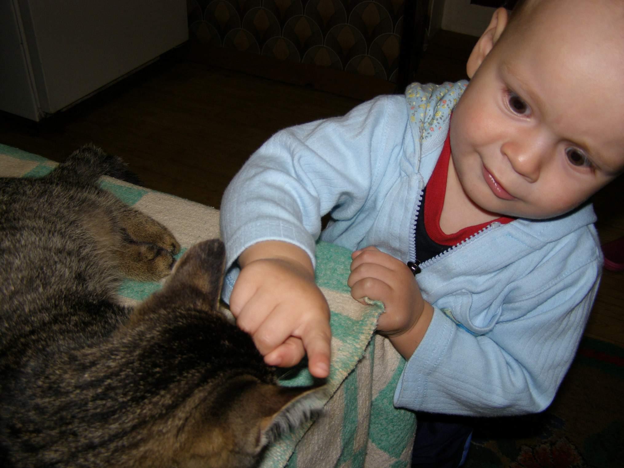 Маленький юннат. Ребята и котята
