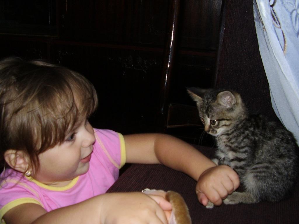 Давай дружить?. Ребята и котята