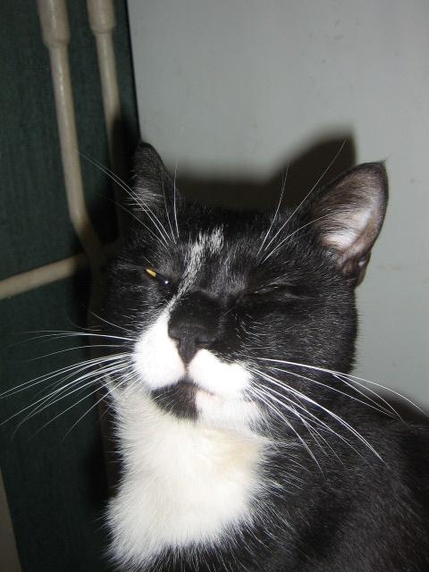 Вавась  Васич   .   \фото : Катя.\. Кошки