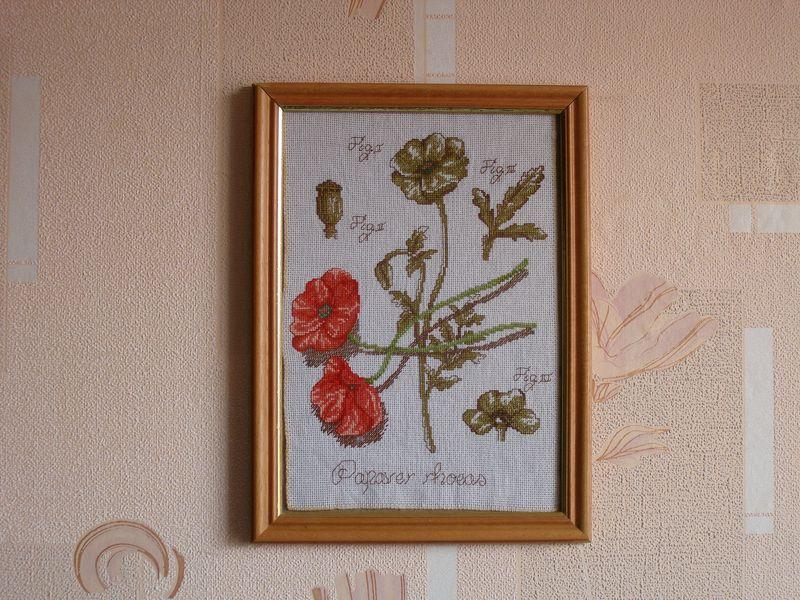Papaver rhoeas. Растения (в основном цветы)