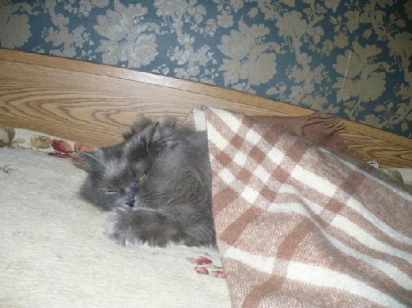 Зимний сон Патрика. Кошки