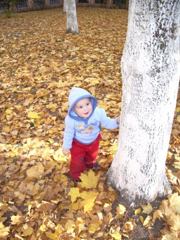 Осень. Дети на прогулке