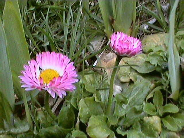 Весна 2007- на даче.