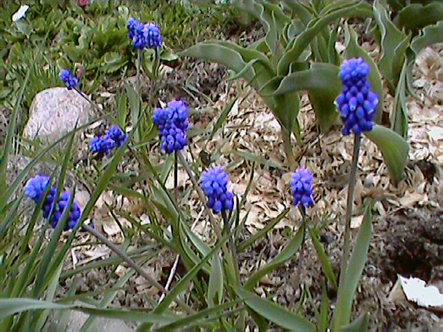 Весна 2007 - на даче.