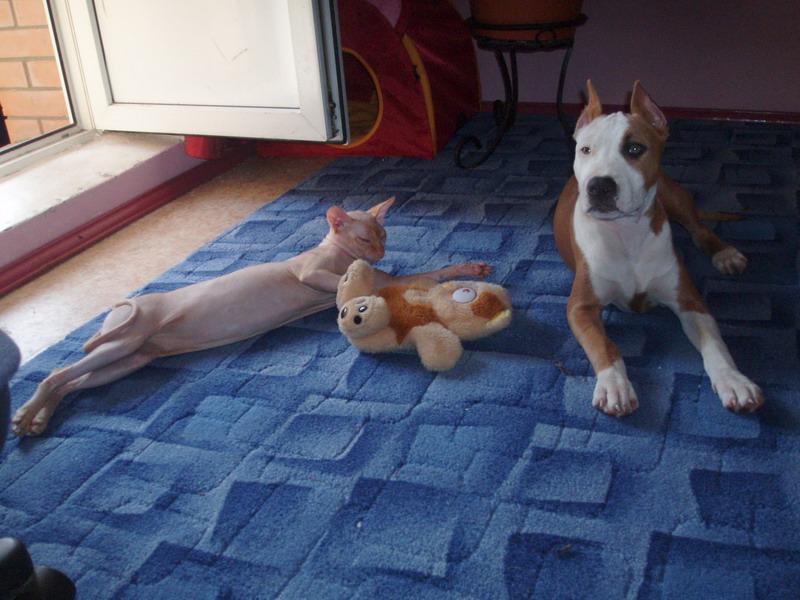 спят усталые игрушки :). Собаки