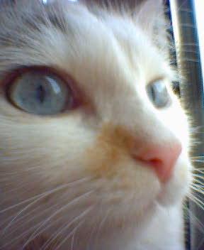 Юкки - наша кошка - юккошка. Кошки