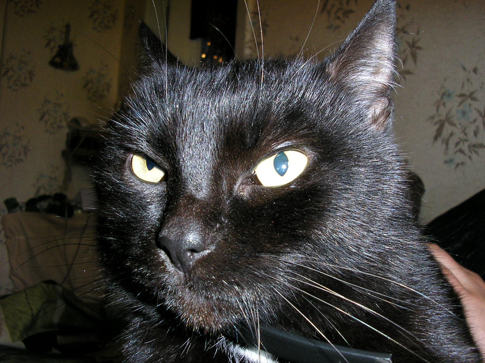 Масик. Кошки