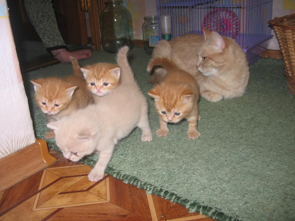 Исследователи.  Котята