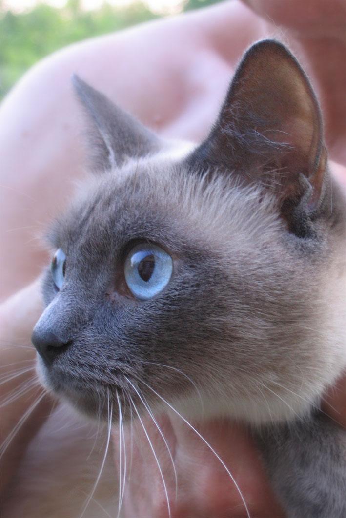 Ева, мамыпапина кошатина. Кошки