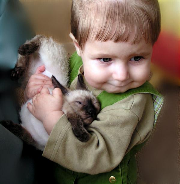 Спи моя радость усни. Закрытое голосование фотоконкурса 'Ребята и котята'