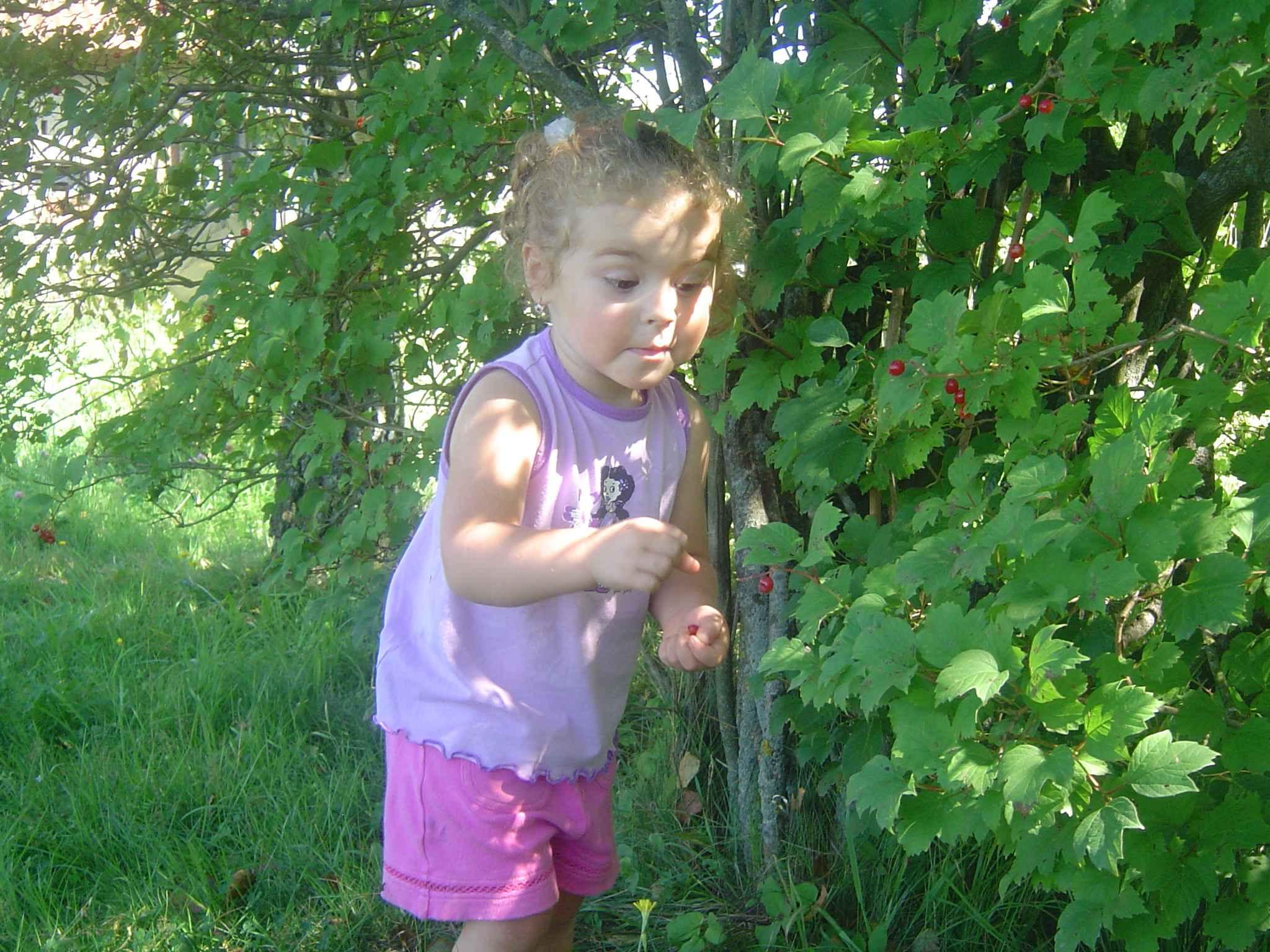 собираем ягоды с умным видом. Маленький Тарзан