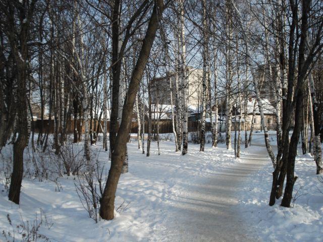 Вот моя деревня. Лесной пейзаж
