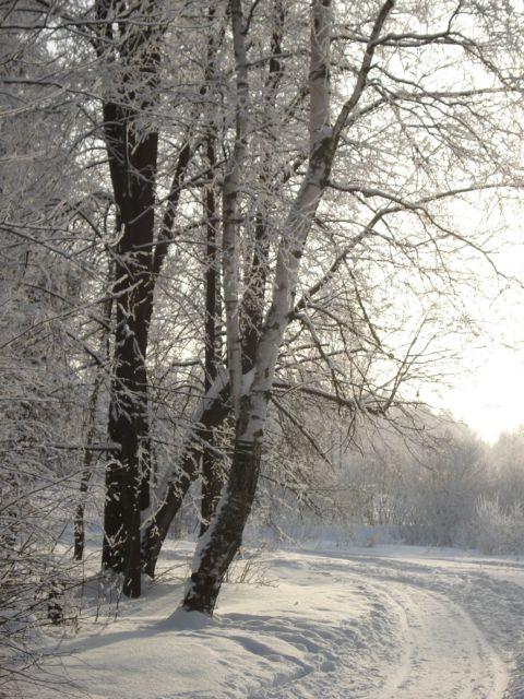 Зимняя сказка. Лесной пейзаж