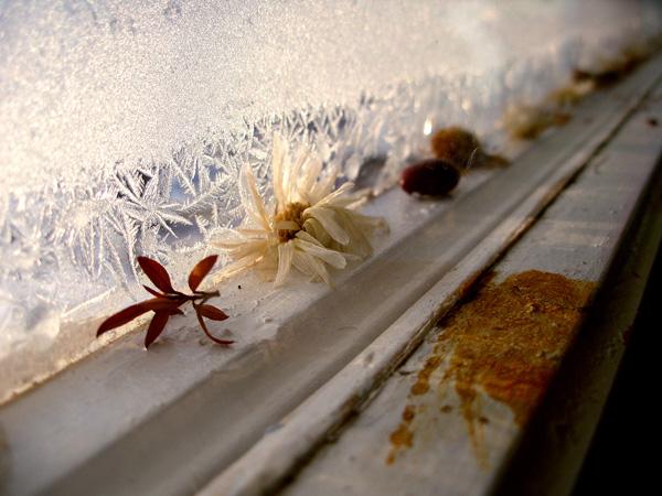 Зима за окном. Зима за окном