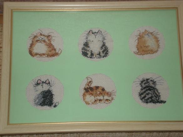 Котики из любимой коллекции. Забавные картинки