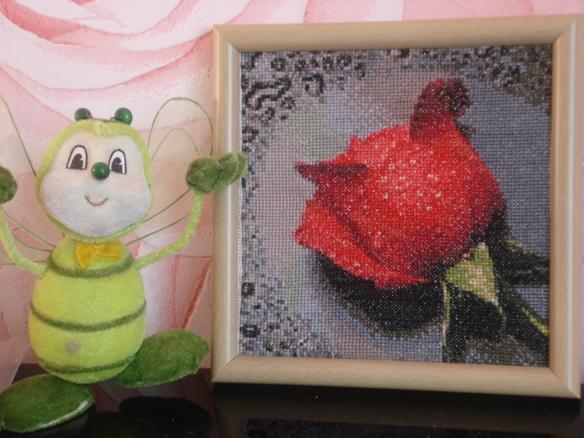 Алая роза в капельках росы. Растения (в основном цветы)