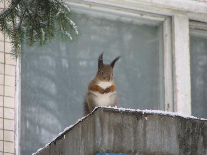 Пустите погреться!!!. Закрытое голосование фотоконкурса 'Зима за окном'