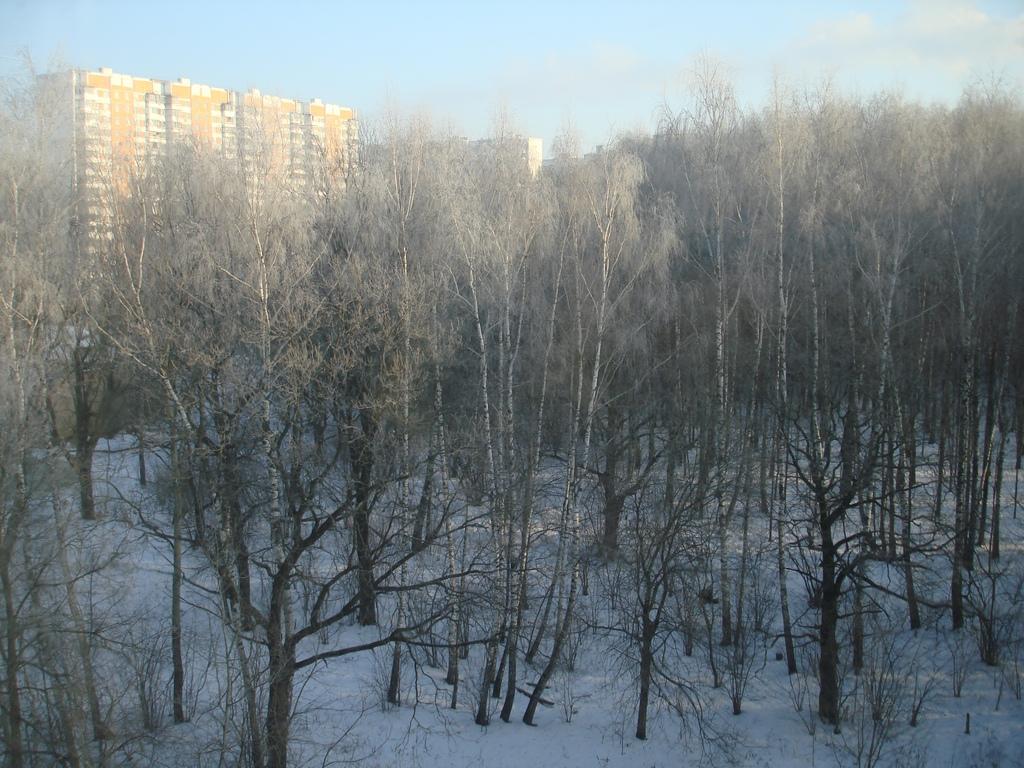 Белые Березы Под Моим Окном. Зима за окном
