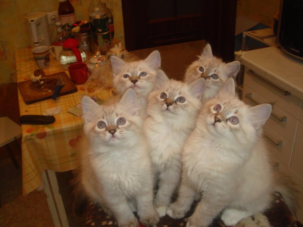 дети. 2 мес 1 нед. Кошки