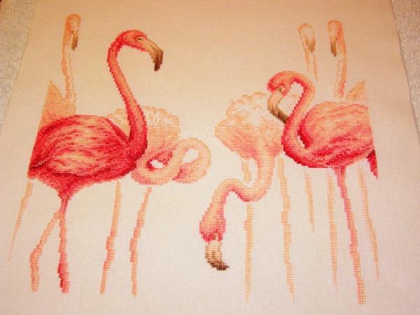 Фламинго. Птицы