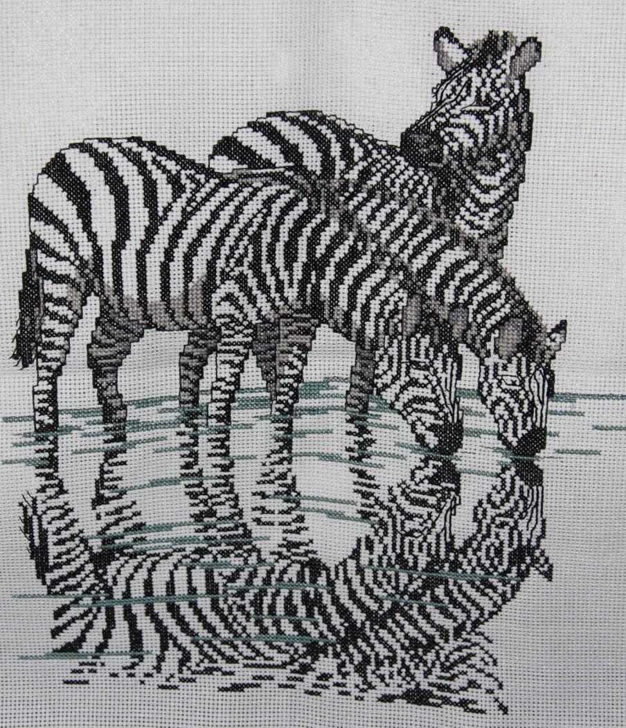 зебры. Животные