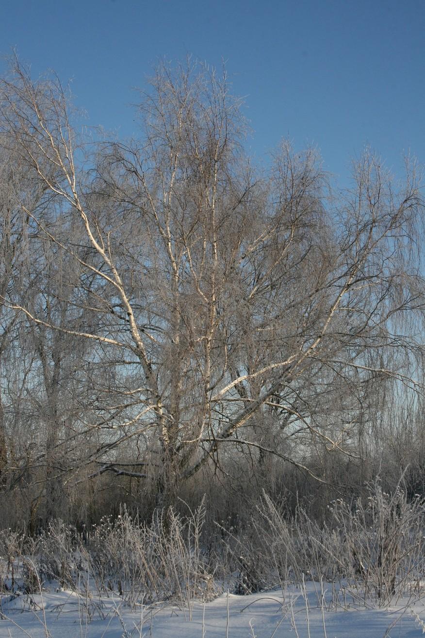 Зимушка зима. Лесной пейзаж