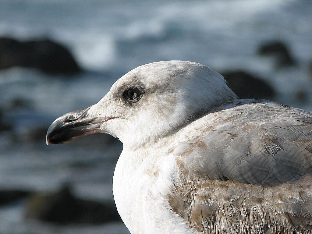 Океанская птица. Другие животные