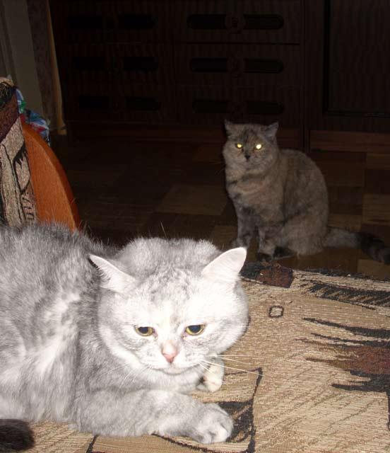 Глупая Масяня и ее прабабушка Тарталетт  по родословной, но отзывается на Таракана :). Кошки