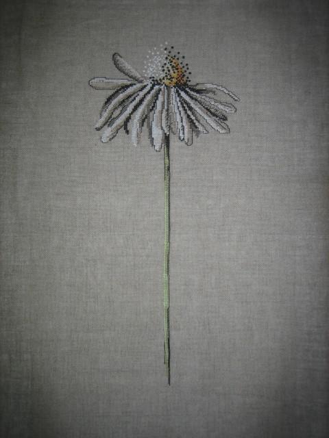 Раз ромашка, два ромашка.... Растения (в основном цветы)