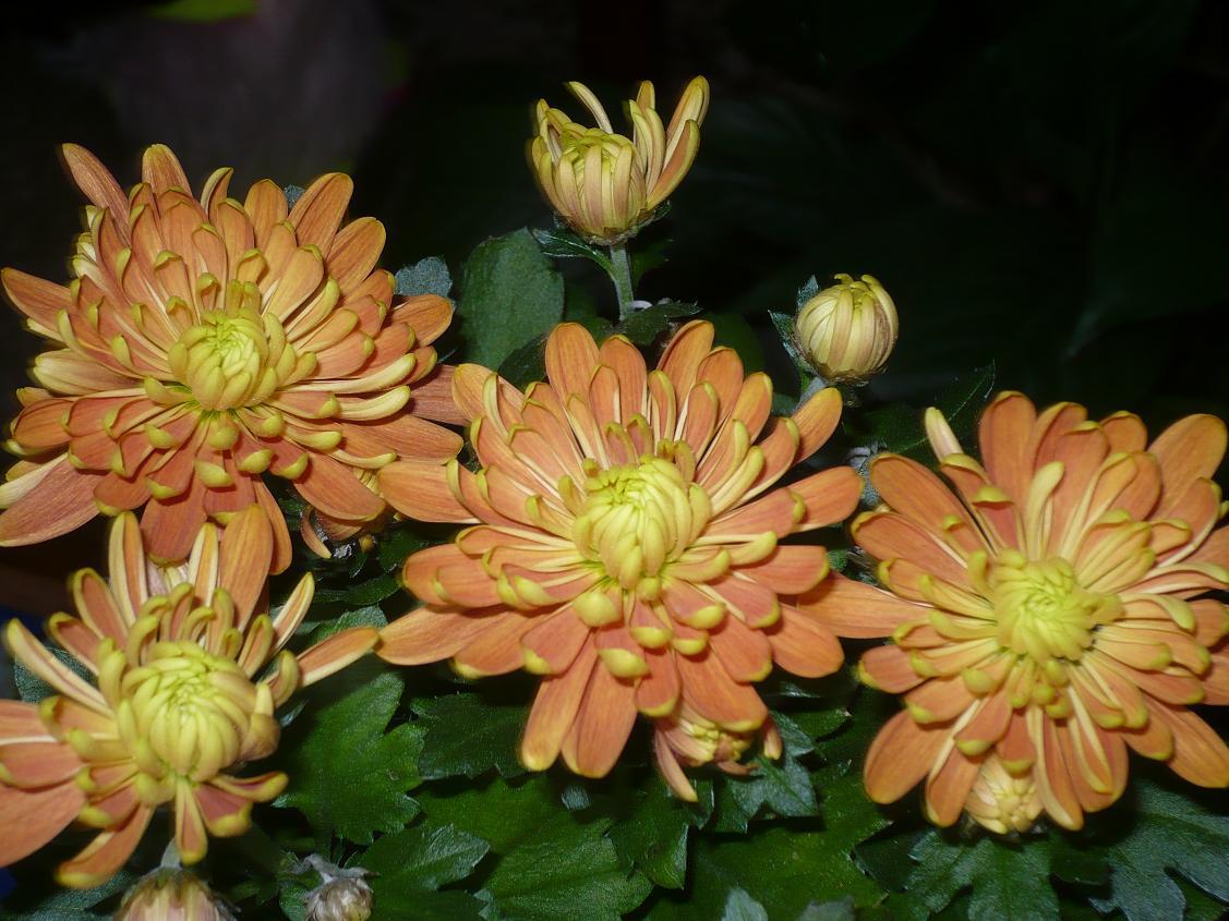 Растения (в основном цветы)