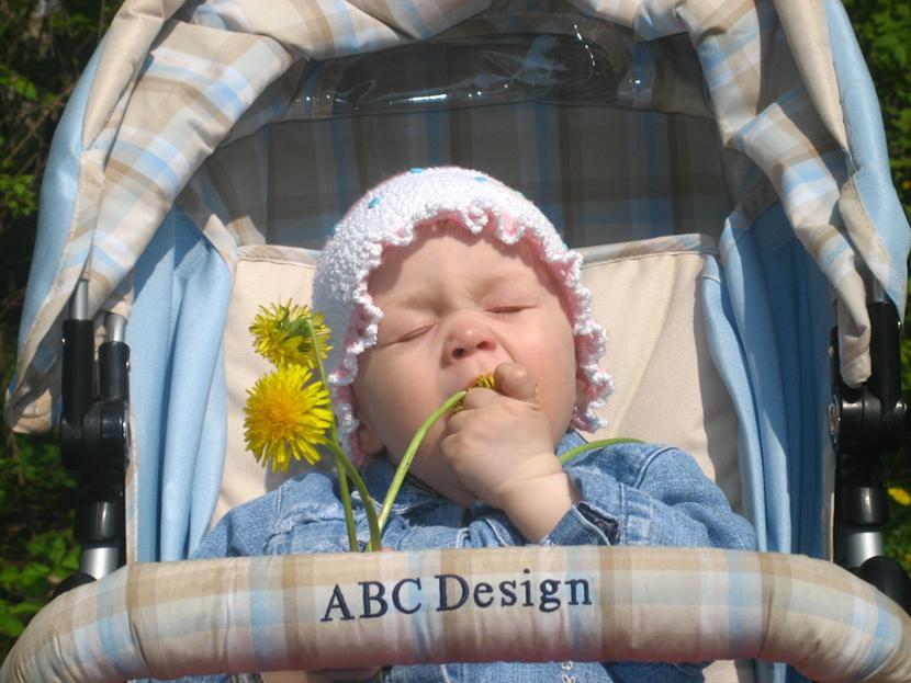 Кто сказал, что цветы можно только нюхать!. Малыши-грызуны