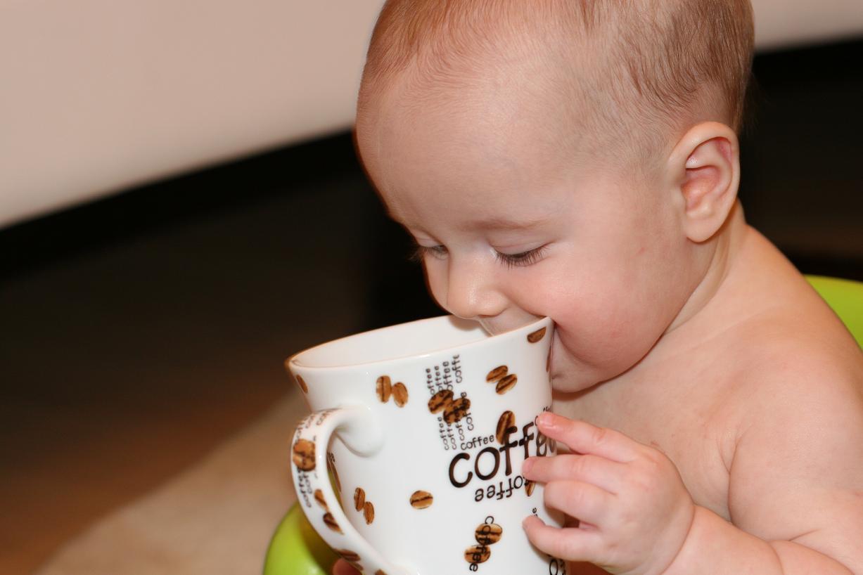 Лучший кофе на дороге!. Малыши-грызуны