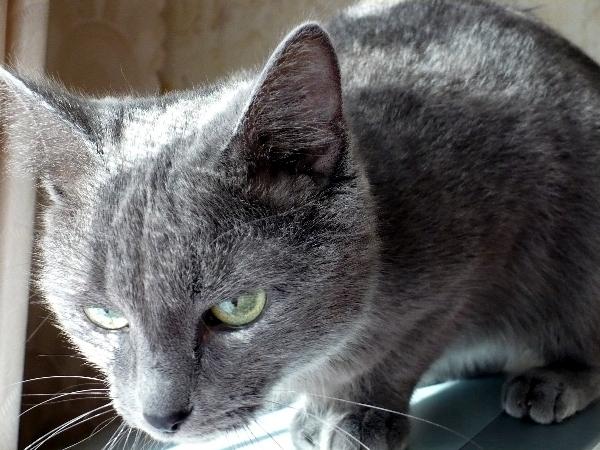 Моя кошка Джина1. Разное