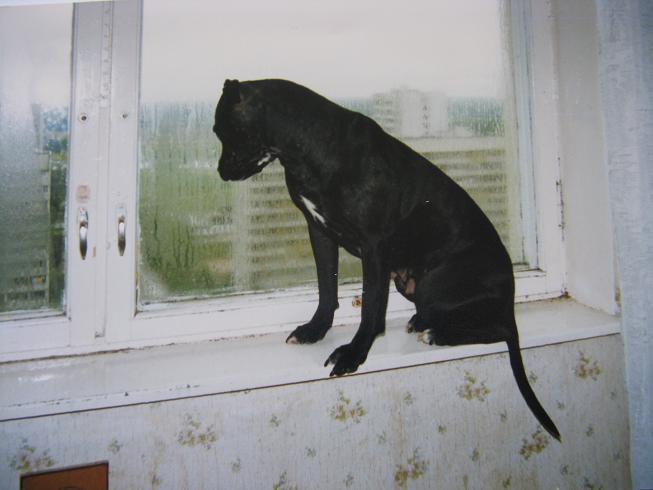 а за окном дождик.... Собаки