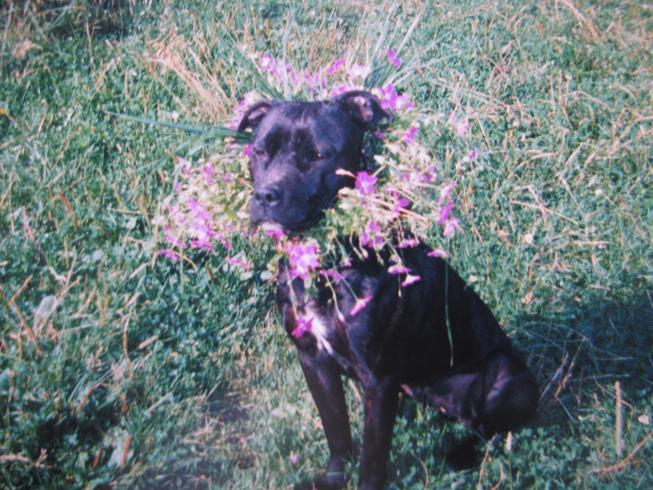 в цветочках:)). Собаки