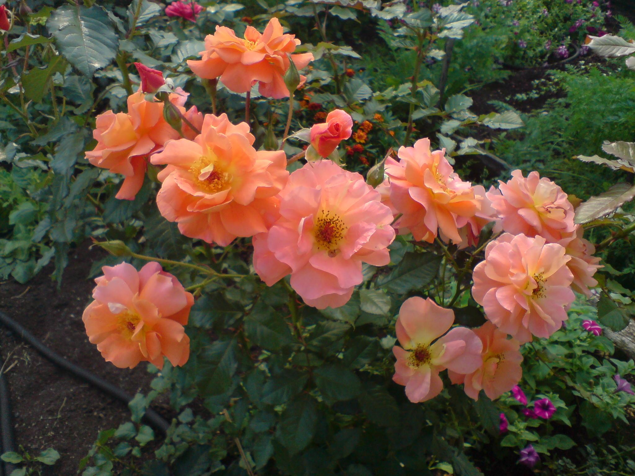 мои любимые цветы. Цветы