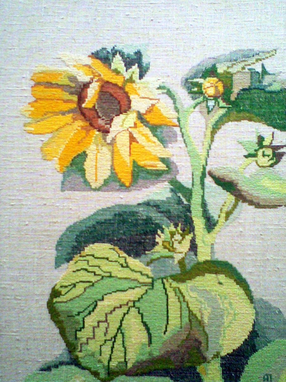 Подсолнух. Растения (в основном цветы)